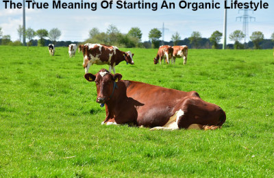 The True Meaning Of Starting An Organic Lifestyle