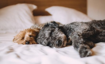 Dogs at Home: Tips and Tricks to Leave Your Energetic Canine Behind for a Time