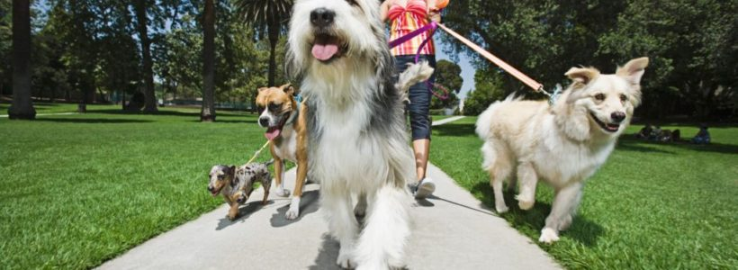 Love Dogs? Start Your Business or Make Extra Money While Playing With Furry Friends!