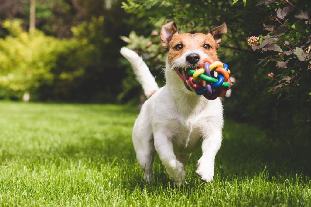 Choosing the Best Daycare Center for Your Dog
