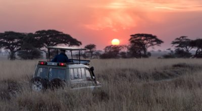 Super Safari: Finding Your Wild Side