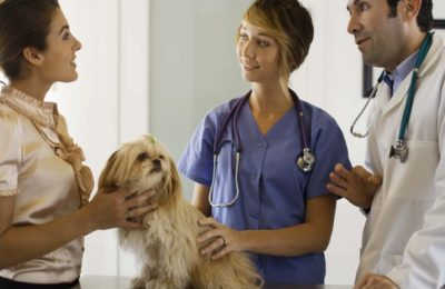 How to become a professional veterinarian with practice license?