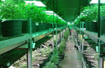 5 Reasons The Marijuana Debate Is So Popular