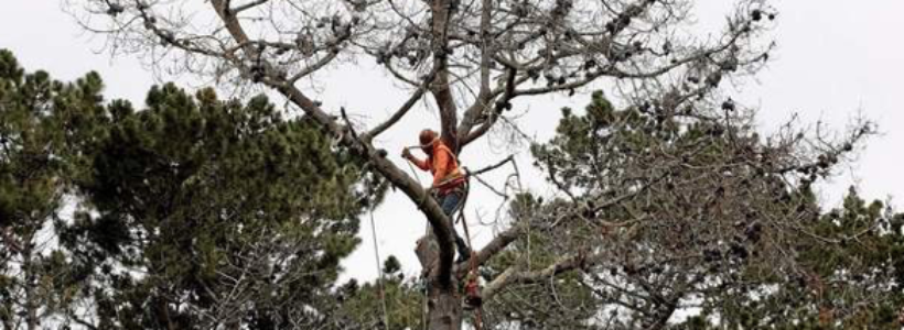 Get Edmonton Arborists to Remove Dead Trees from Your Property
