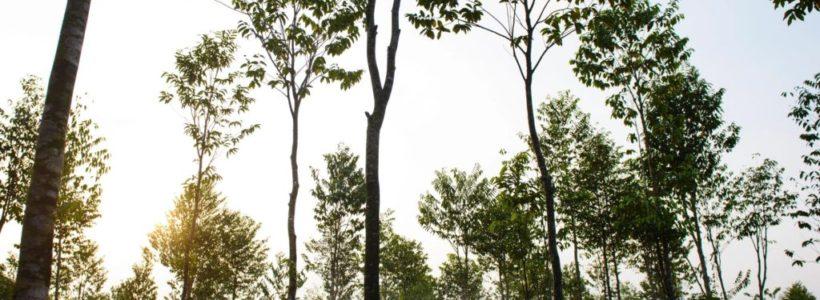 7 Major Qualities of a Successful Arborist