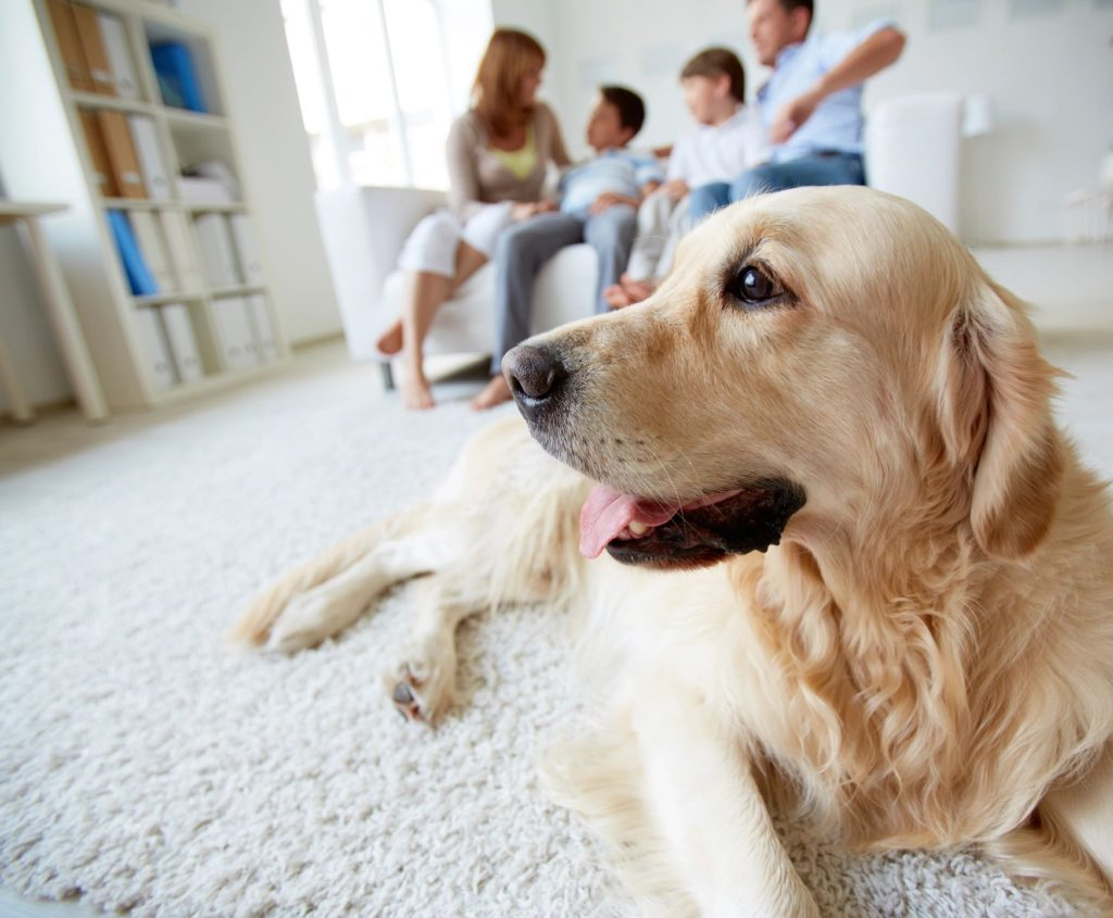 5 Fashionable Ways To Make Your Home Pet Friendly