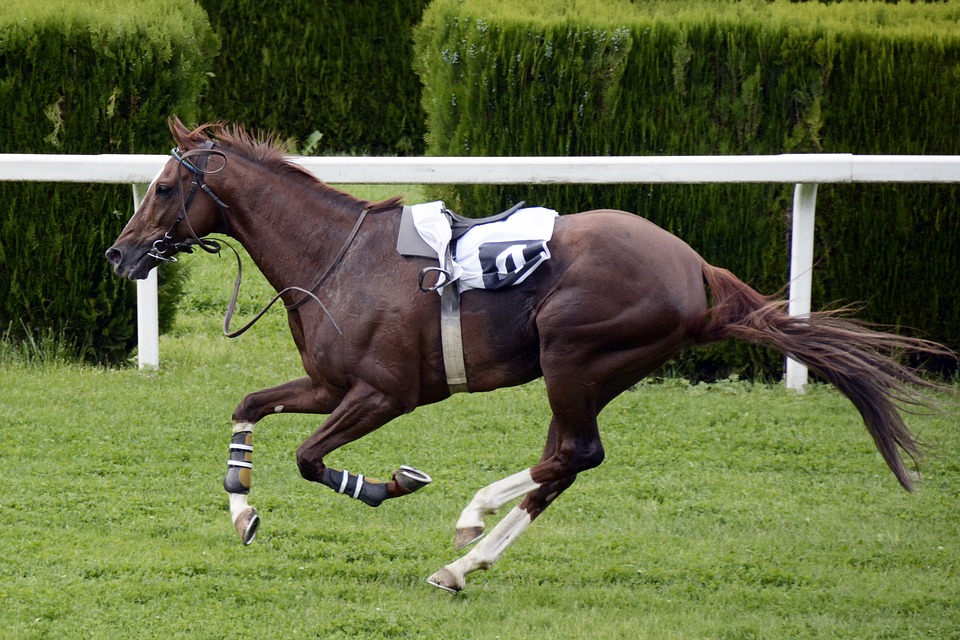 How to Keep Racehorses in the Best Shape? Maintain Ideal Weight of Your Horse