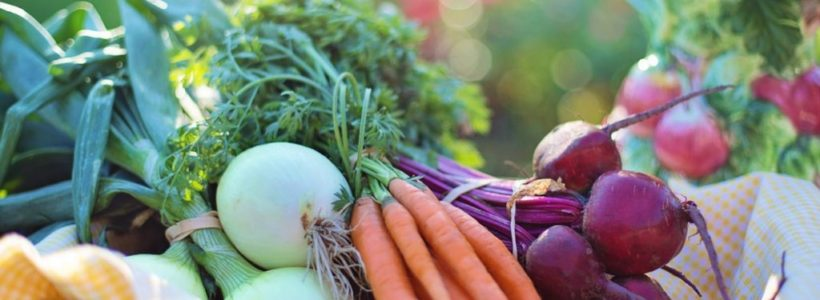 Guide to Growing a Healthy Vegetable Garden (Feed your family)