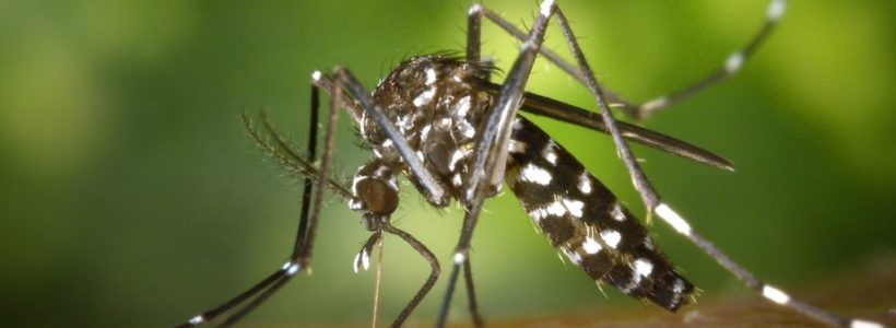 Preventative measures that can keep you safe against malaria